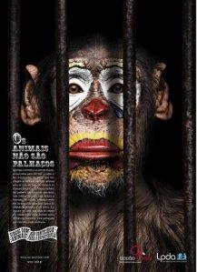 animais-nao-sao-palhacos-macaco