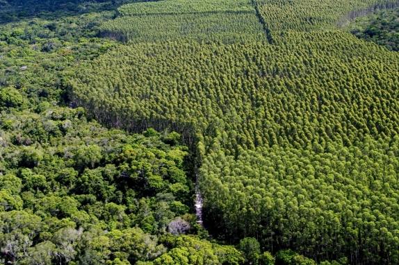 http://centrodeestudosambientais.files.wordpress.com/2009/10/investimentos.jpg?w=574&h=382
